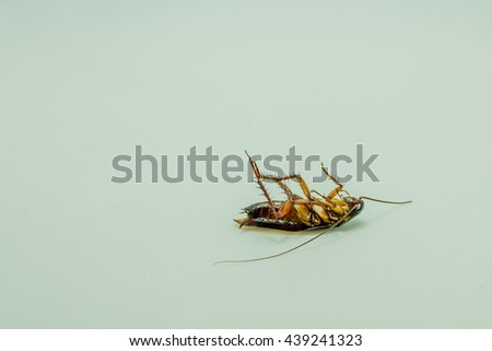 close up dead cockroaches lying - stock photo