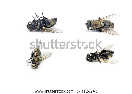 close up dead flies on isolated background - stock photo