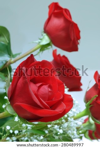 Close up detail of red roses with baby's breath. Shallow depth of field. Red roses are a symbol of love. Image would be excellent for romantic concept or theme of anniversary or Valentine's Day. - stock photo