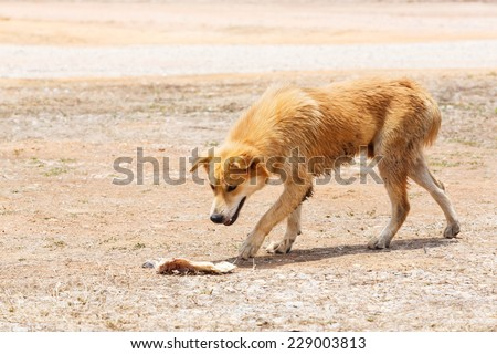 Close up dirty stray dog looking at the bone on ground - stock photo