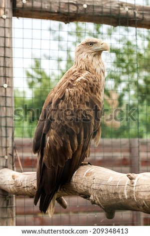 Close up Eagle in the cage - stock photo