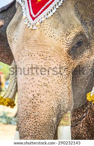 Close-up Elephant front - stock photo