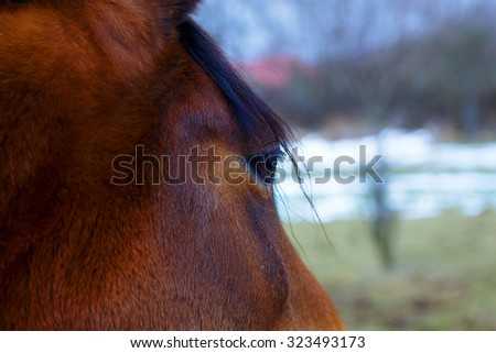 Close up eye of the horse and land in background - stock photo