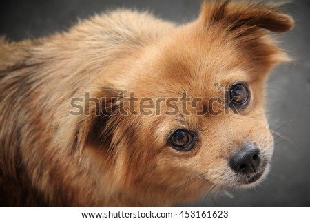 Close up face of a brown stray dog on the street, looking up at camera with innocent expression - stock photo