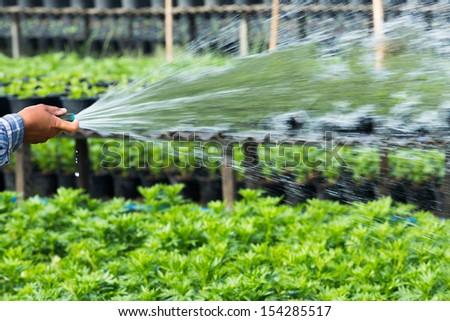 Close up farmer watering plant via plastic hose - stock photo