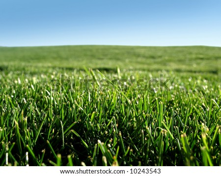 Close up field of grass & blue sky - stock photo