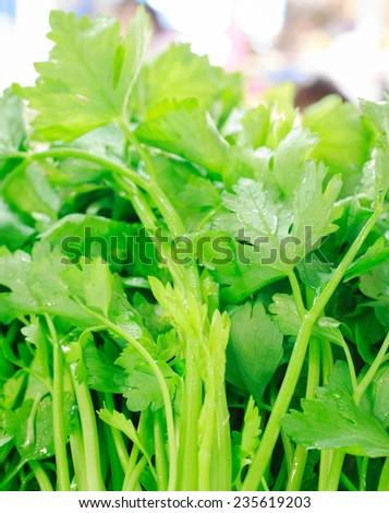 close up fresh celely in market,celely backgrund - stock photo