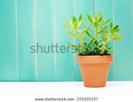 Close up Fresh Small Green Plant on a Pot with a Teal Colored Wall Background - stock photo
