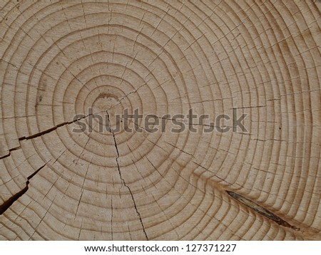 close-up from a spruce slice - stock photo