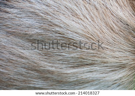 close-up goat hair - stock photo
