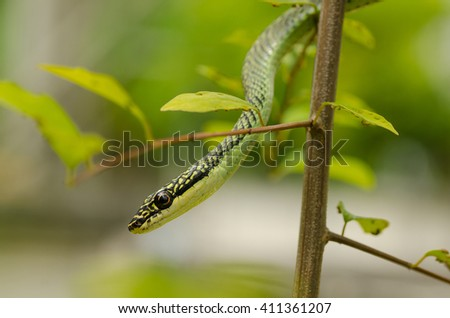 Close up Golden tree snake relax on the leaf - stock photo