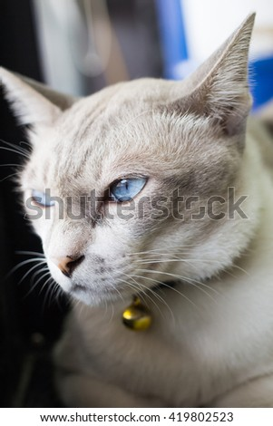 close up gray cat sitting by the window lonely mood.selective focus. - stock photo