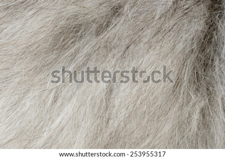 close up gray fur background - stock photo