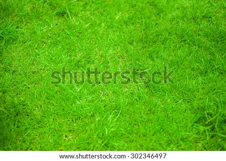close up green lawn,texture - stock photo