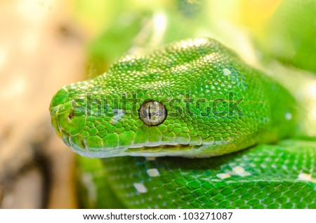 Close up green snake. - stock photo
