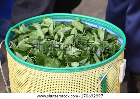 Close-up green tea in basket - stock photo