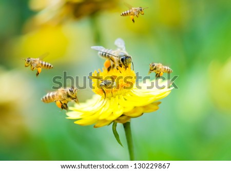 Close up group of bees on a daisy flower - stock photo