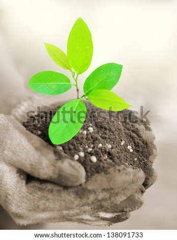 CLose up hand holding tree growing with soil - stock photo