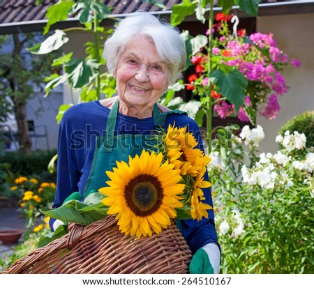 Close up Happy Elderly Woman Carrying a Basket with Attractive Sunflowers at the House Garden  Looking at the Camera. - stock photo
