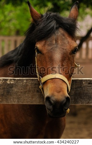 Close-up head of a brown horse in a pen  - stock photo