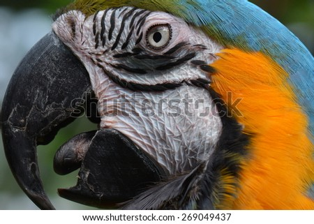 Close up head shot of a South American Macaw. - stock photo