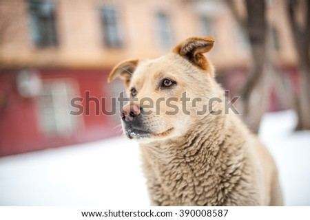 Close-up homeless dog portrait - stock photo