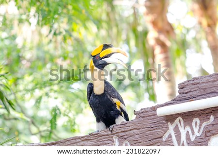 close up hornbills sitting on branch in the zoo - stock photo