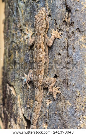 close up House small lizard on the tree - stock photo