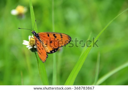 Close up image of a butterfly perch on a wildflower - stock photo