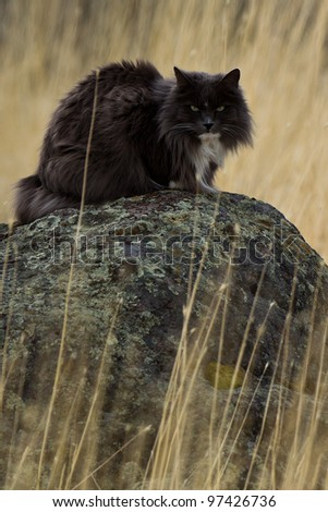 Close-up image of cat in a wilderness. - stock photo