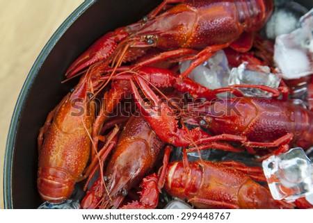 Close up image of crayfish on ice. - stock photo