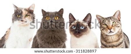 Close-up image of four different breed cats looking forward at the camera - stock photo