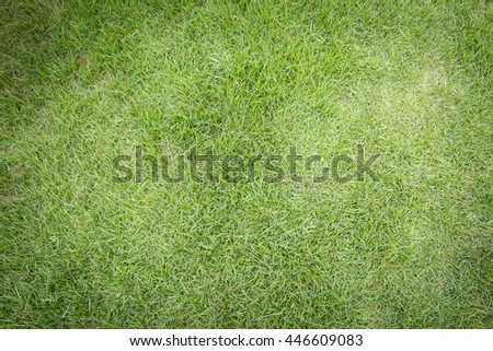 Close-up image of green grass, grass background, bird eyes view. - stock photo