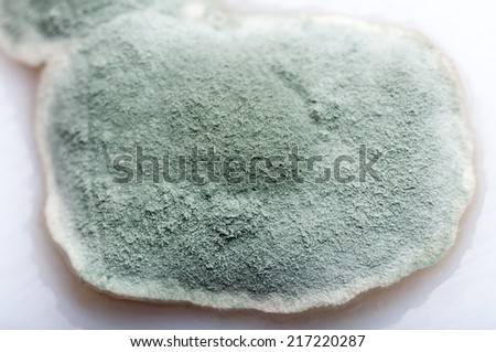 Close-up image of mold - stock photo