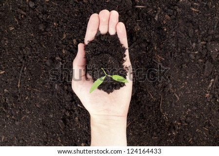 Close up image of plant in hand - stock photo