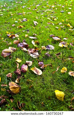 close up in the autumn park  - stock photo
