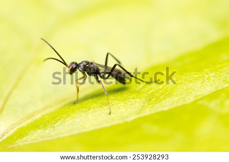 close-up insect in wild nature - stock photo