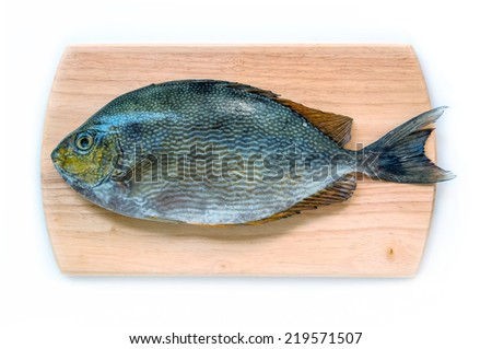 Close up Java rabbitfish, Bluespotted spinefish or Streaked spinefoot fish on Wooden Chopping Block Board a wood background - stock photo