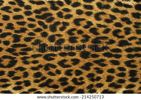 Close up leopard spot pattern texture background - stock photo