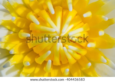 close up lotus pollen for background - stock photo