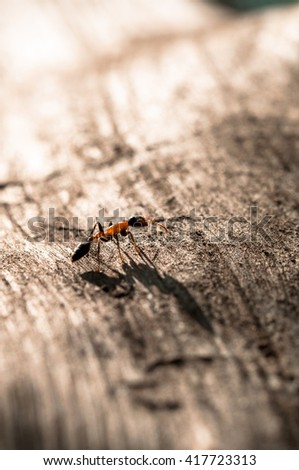 Close up, macro photo of fire ant at work on tree in forest  with soft focus ,blurred - stock photo
