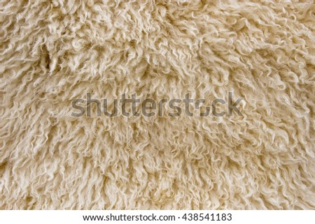 close up macro shot of wool sheep texture for  background - stock photo