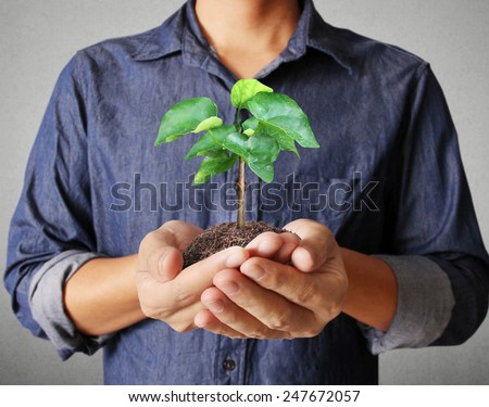 Close up man hands holding plant  - stock photo