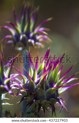 Close-up nature photo of a spiky pink and green field flower - stock photo