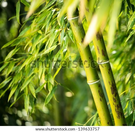 Close-up of a bamboo plant - stock photo