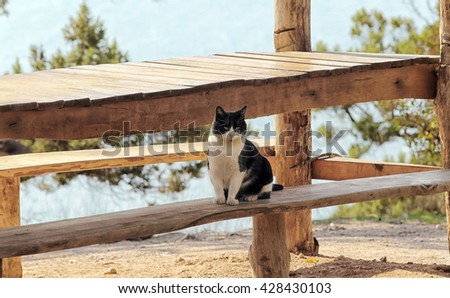 close-up of a beautiful black and white cat on a wooden bench in an outdoor cafe - stock photo