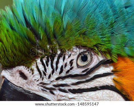 Close up of a Blue and Gold Macaw Eye - stock photo