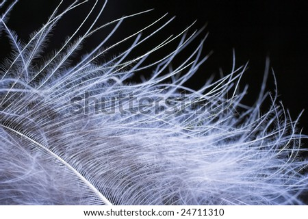 Close-up of a blue feather on a black background - stock photo