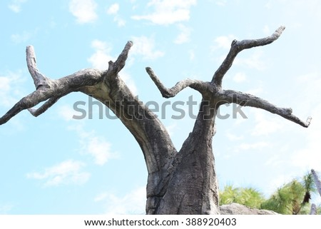 Close-up of a boab tree - stock photo