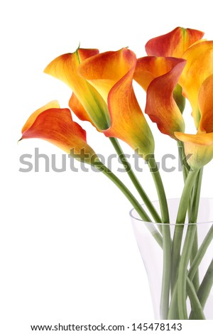 Close-up of a bouquet of calla lilies in a glass vase. Isolated - stock photo